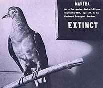 MarthaExtinct